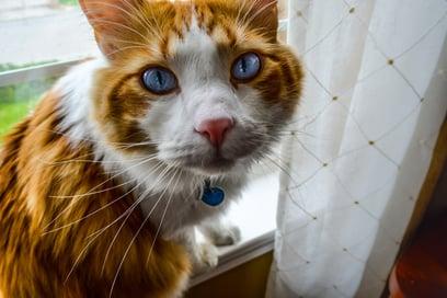 cat-2325406_1920