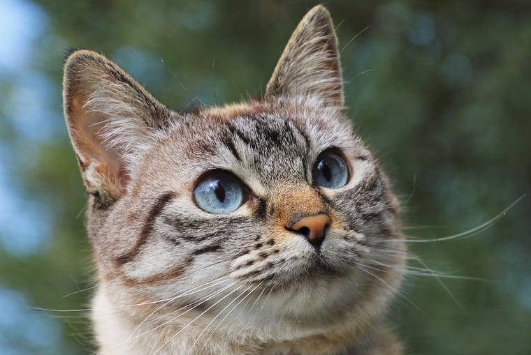 cat-6463284_1920