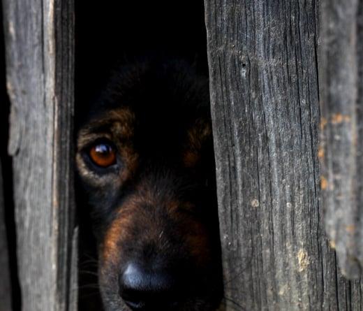 dog-2215185_1920111