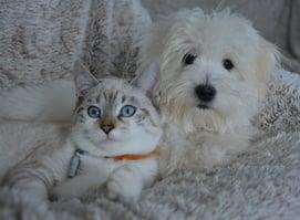 white dog and cat