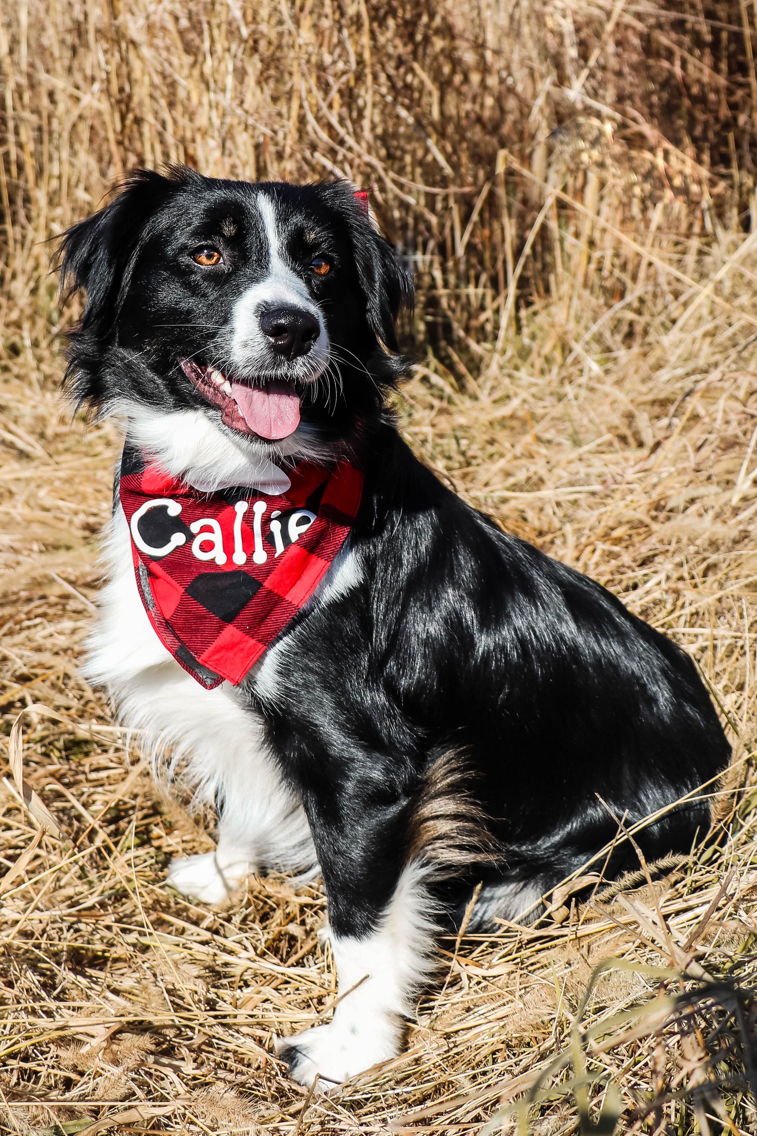 Callie November 2
